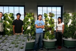 Tower Gardens at JVL Wildcat Academy