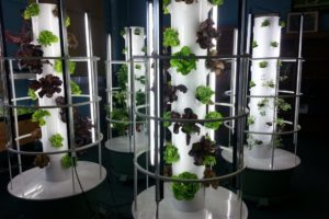 Tower Gardens at CS55